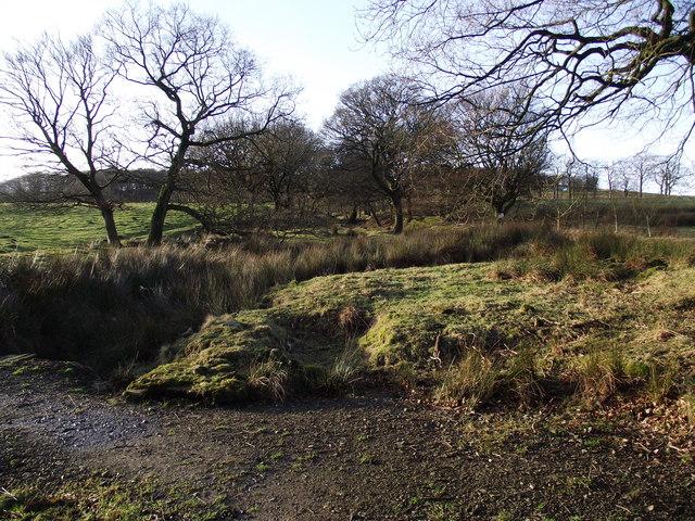 Woodland on the moor