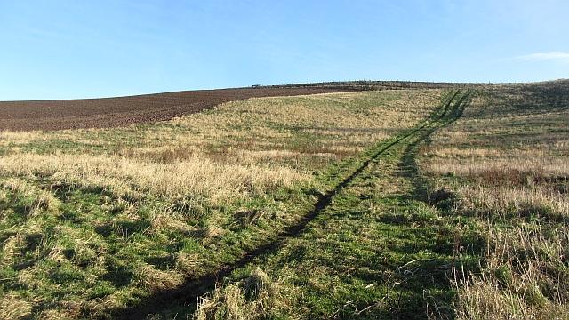 A steep field, Roxburgh