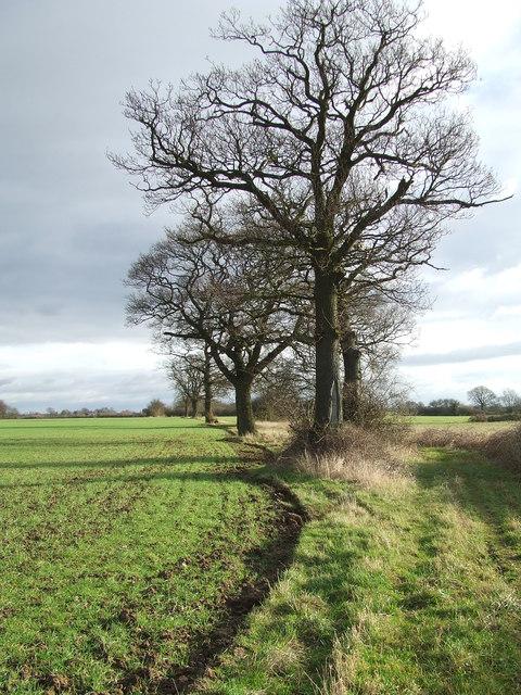 Saddler's Lane
