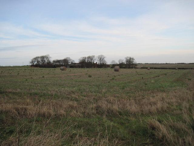 Stubble  Field  to  North  Mount  Farm