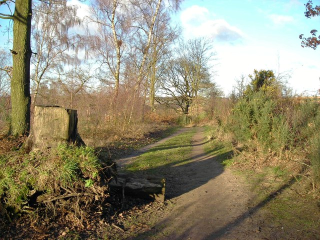 Black Scotch Lane skirting Harlow Wood