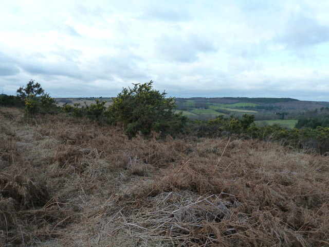 Gorse and bracken on Ashdown Forest