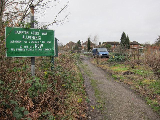 Hampton Court Way allotments