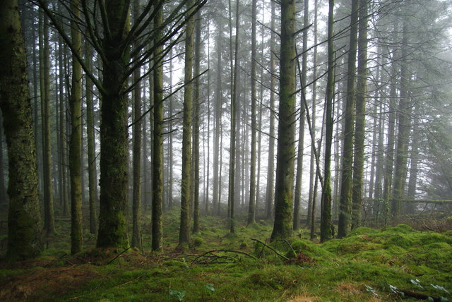 Forest at the northern end of Llechwedd Gwinau