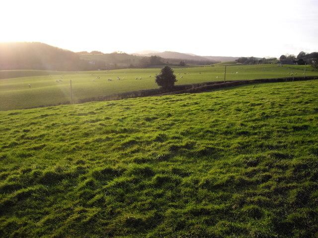 Pastureland and sheep, near Rhiwderin