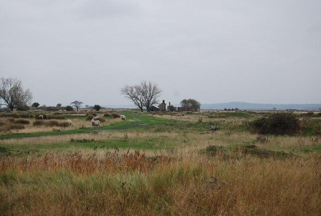 Sheep and munition factory ruins.