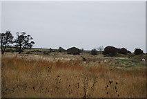 TQ7178 : Munitions factory ruins by N Chadwick