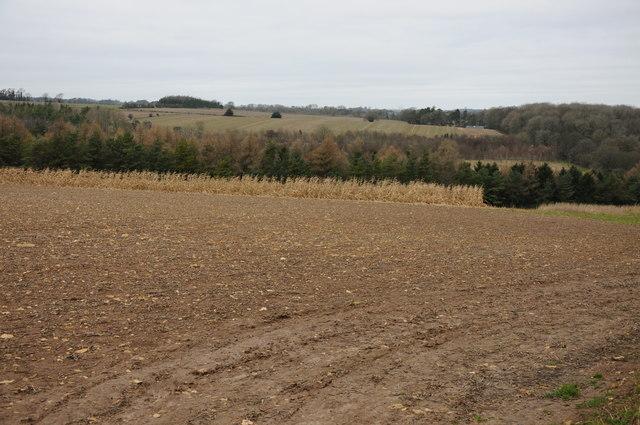 Arable field above Alder Bank