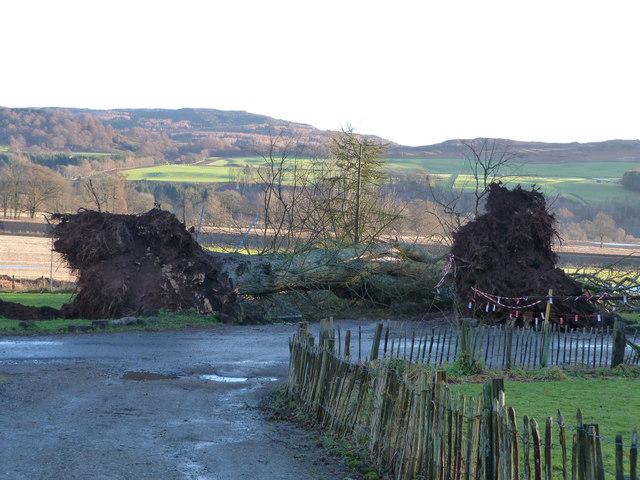Fallen giants at Dalguise