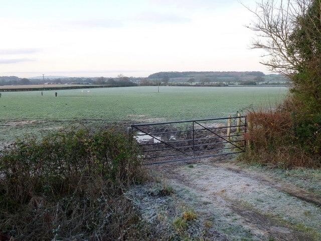 Pasture land at Sledge Green