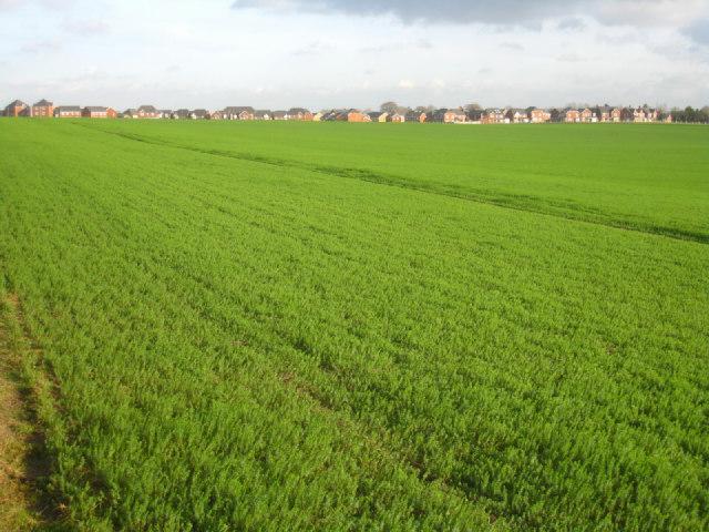 Farmland meets Basingstoke