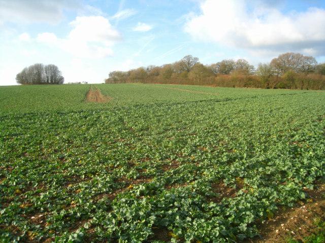 Roundgrove field & Mothers Copse
