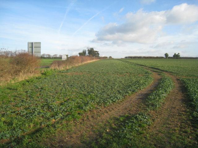 White Borough field (41 acres)