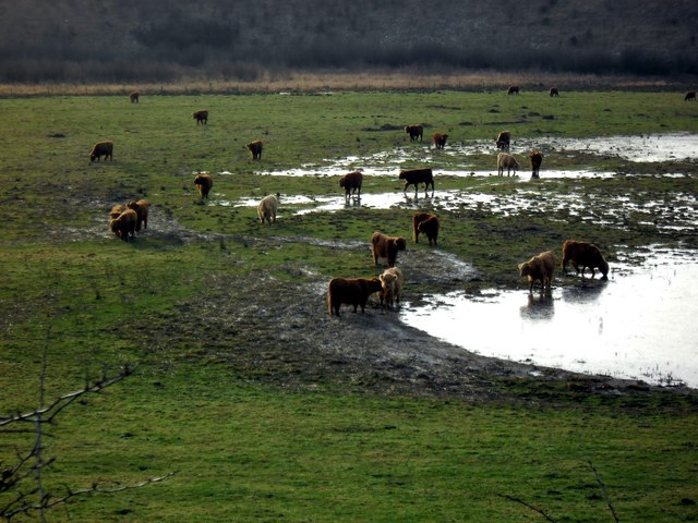 Highland Cattle at Newton Ings.