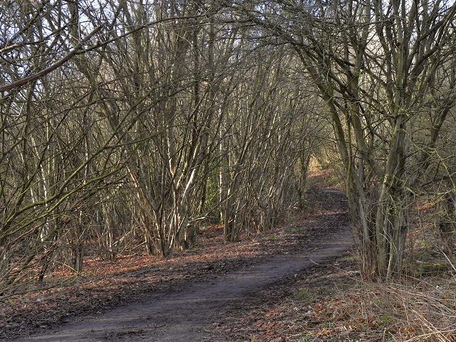 Path along Kickety Brook