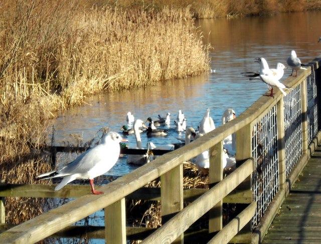 Feeding the Birds at Fairburn.