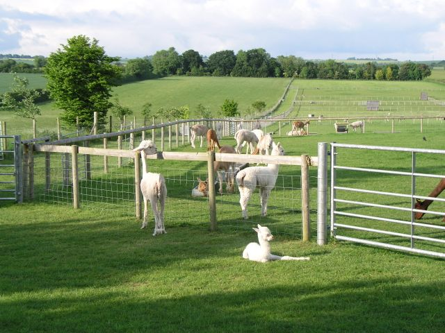 Cherwell Leys Alpaca Farm