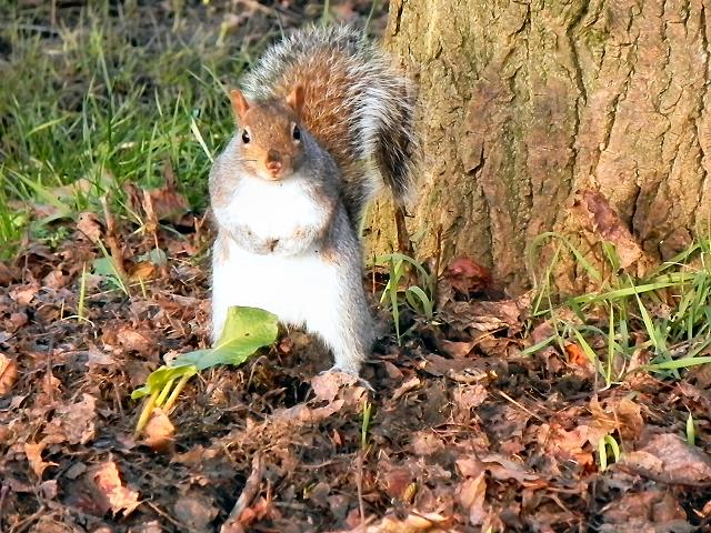 Squirrel at Walton Park