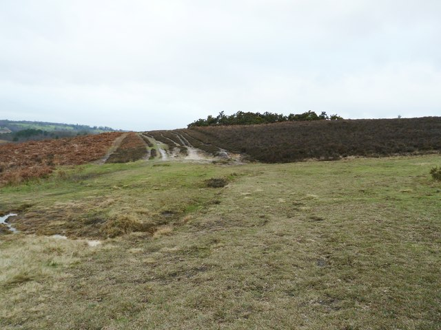 Track crossing on Ashdown Forest