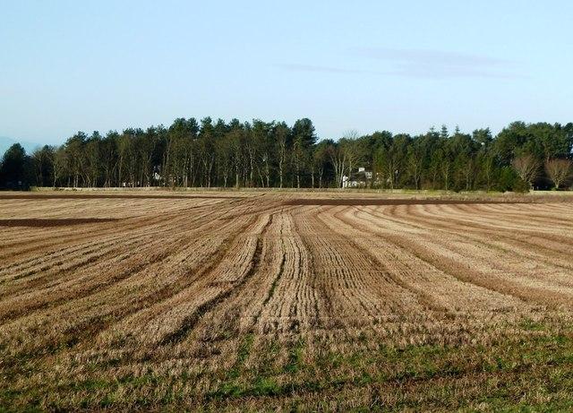 Winter Fields Near Troon