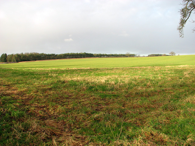 Cultivated field in January sunshine