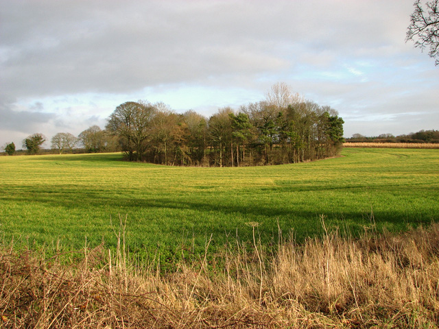 Copse in field north of the B1145 road