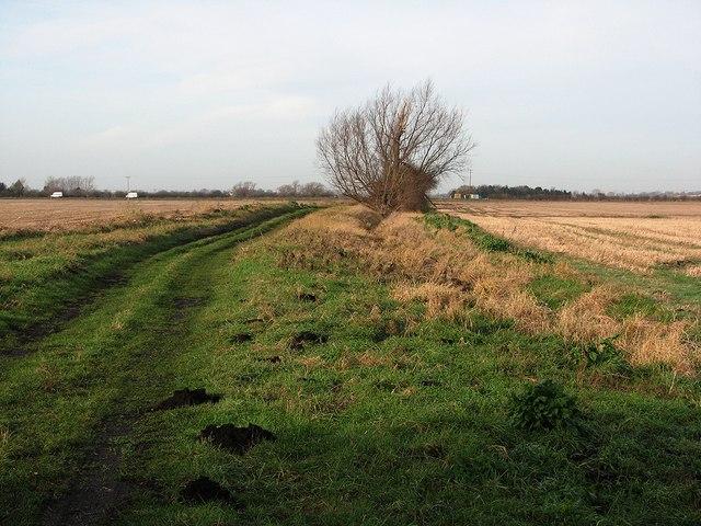 Molehills and track to Long Drove