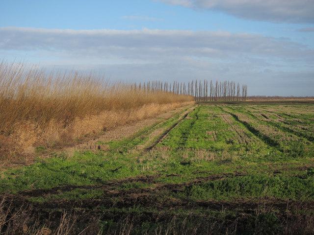 Stubble field, Methwold Fens