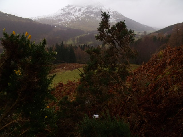 Gorse in minor burn course on south slopes of Carn Gorm in Glen Lyon