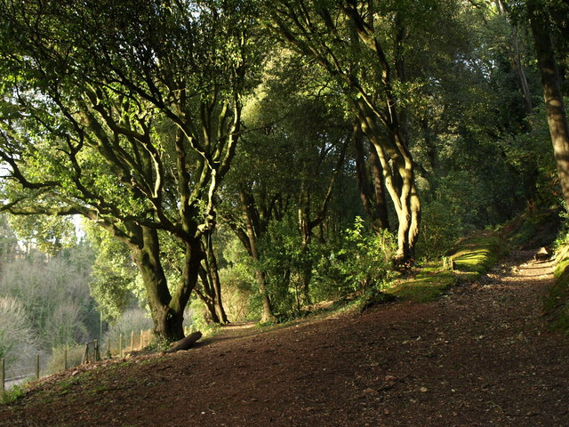 Chapel Hill Woods