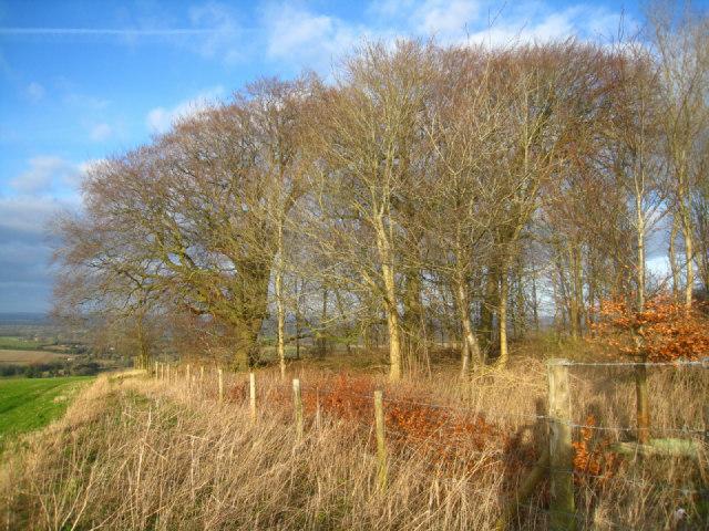 Path on Cottington's Hill