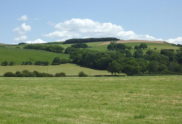 Pasture north of Tregaron, Ceredigion