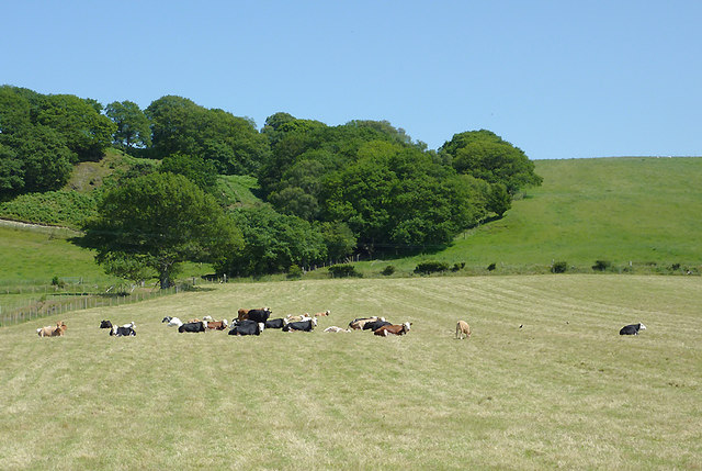 Hillside grazing north of Tregaron, Ceredigion