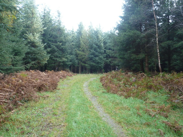 A forestry track near Mark Hill