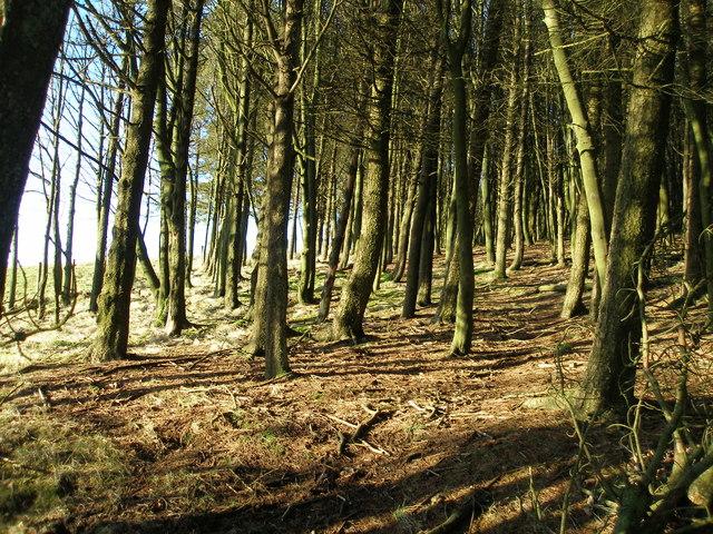 Footpath through New Laithe wood