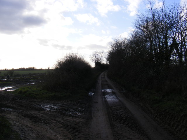 Bowman's Lane