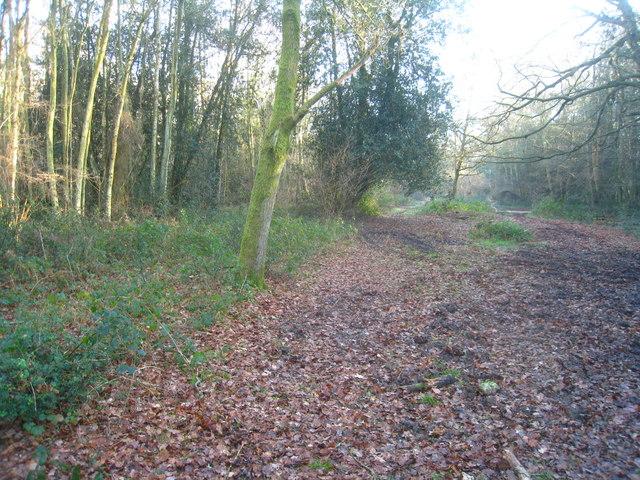 Track in Odiham Wood