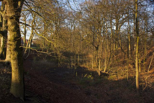 Woodland alongside the A6