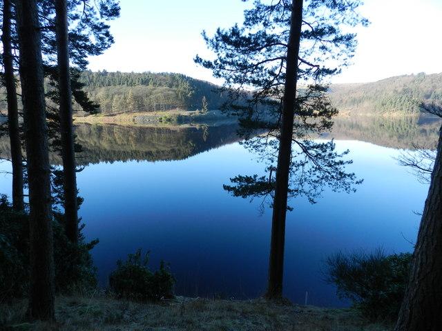 Upper Derwent Reservoir; conifers