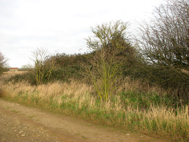 Bramble patch beside farm track, South Acre