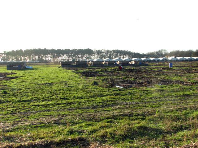 Pig houses by Fourteen Acre Plantation, Swaffham