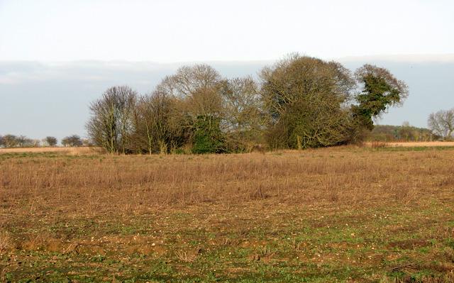 Copse in fields west of Swaffham