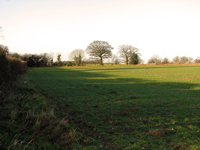 Cultivated field north of the A47 road (Swaffham)