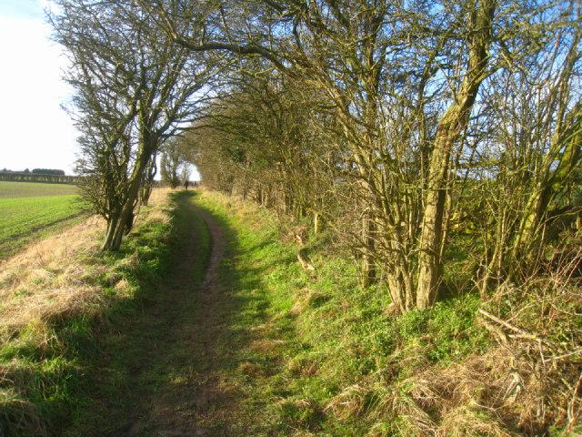 Wayfarer's Walk - Stubbington Down
