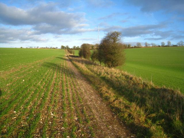 Path along field margin