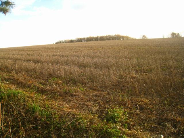 Arable fields - Cottington's Hill