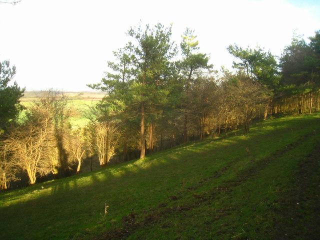 Path on Freemantle Park Down