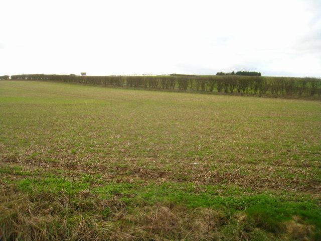 Arable land - Stubbington Down