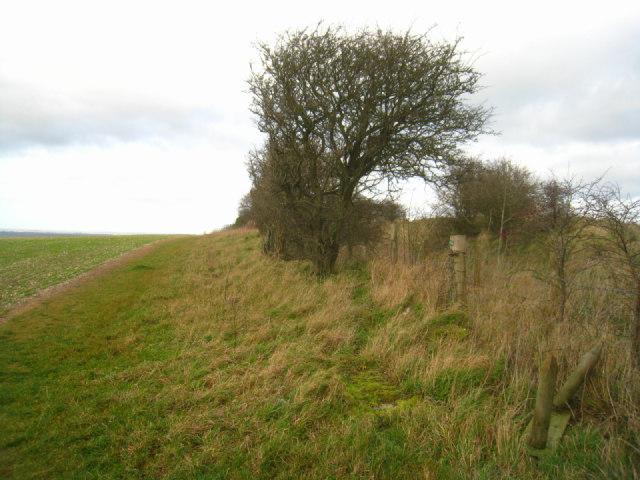 Path beside a Park Pale