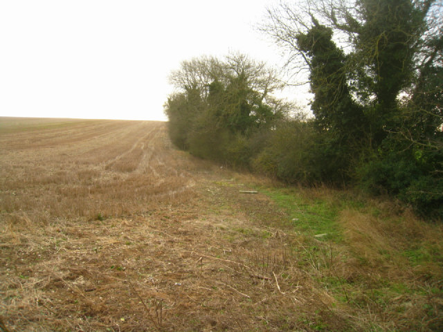 Field boundary - Stubbington Down